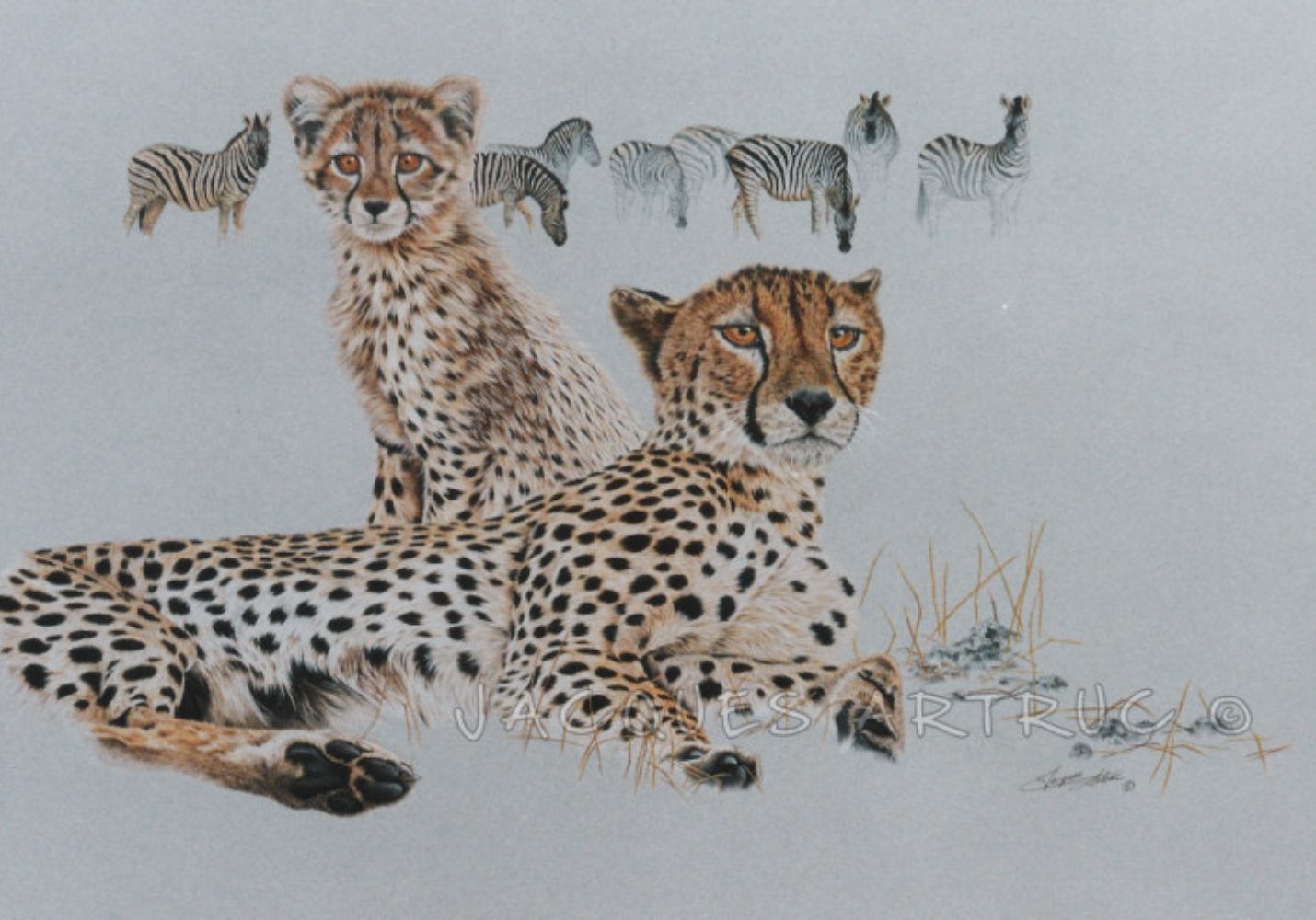 Cheetahs  on the plains