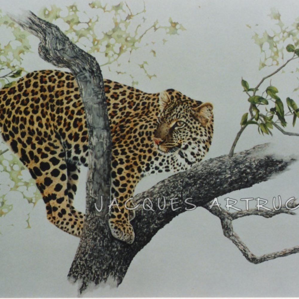 Leopard_B_3